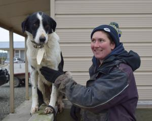 Mount Linton Station sheep genetics manager Martha Broughton got the top price of $8000 for her 3...