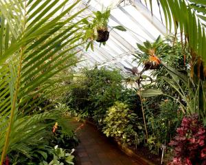 In the Winter Garden Glasshouse at Dunedin Botanic Garden. Photo: Linda Robertson.