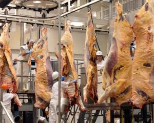 Beef carcasses at Silver Fern Farms' Finegand plant.