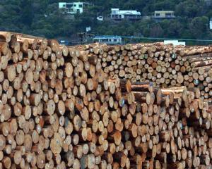 Belt tightening is ahead for the forestry sector after prices fell 25% in recent months. Photo by...