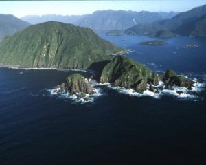 Breaksea Island, rat-free after a trend-setting eradication programme in 1991, received 59 South...