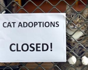 Cat adoptions at Otago SPCA are on hold for two weeks after about 40 cats were exposed to a...
