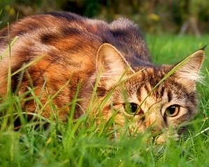 Catstalkprey.jpg
