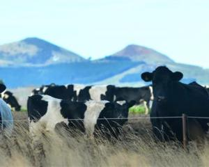 Dairy prices significantly boost trade terms. Photo by Peter McIntosh.