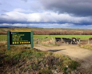 Dairy stock increasingly border the Otago Central Rail Trail.  Photo by Gerald Cunningham.