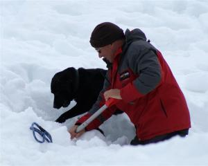 Stephen Hunter and Layla dig in the snow as part of the annual avalanche dog assessment at the...