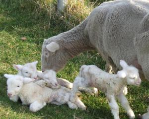 Higher prices for lamb and wool exports in particular underpinned increased gross agricultural...
