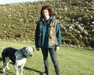 Jan Tairua and Ghost prepare to practise for the national sheep dog trials in Gore next month....