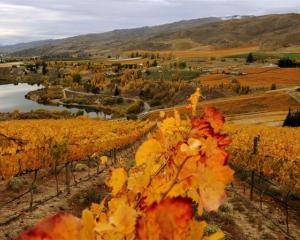 More than half of New Zealand's wineries will benefit from changes to wine excise tax regulations...