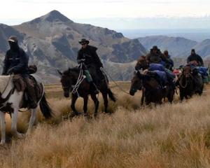 Participants on the Otago Cavalcade pack-horse traverse make their way up Mt Kyeburn in strong...