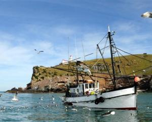 Seagulls flock to the Careys Bay-based fishing boat Vanguard as the fishermen clean the last of...