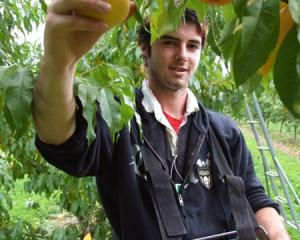 Seasonal work often affects Otago's unadjusted unemployment rate. Photo by Lynda van Kempen.