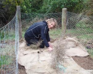 Setpoint Solutions employee Kathi Knox works on establishing habitat for jewelled geckos. Photo...