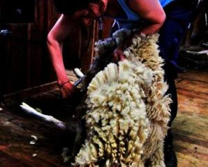 Skyla Taylor has completed a certificate in shearing and wool handling at Telford. Photo supplied.