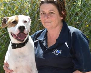 SPCA Otago dog manager Lisa Gerard with 3-year-old American bulldog-cross Tangi, who is available...