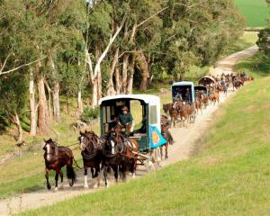 The Alan Nichol Memorial heavy wagon trail heads through Rosedale farm at Weston yesterday, on...