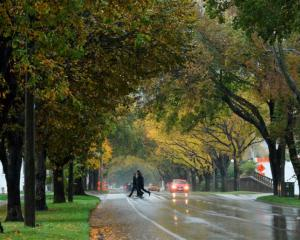 The memorial elms of Anzac Ave in the rain yesterday. Photo by Gerard O'Brien.
