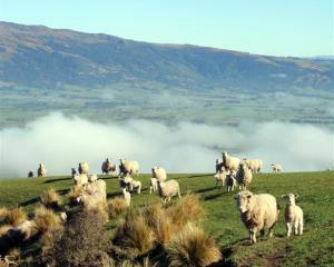 The red meat sector needs to change, but concern remains about its viability. Photo by Stephen...