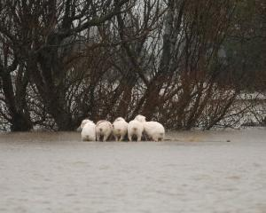 Wet weather has forced the cancellation of wool sales, preventing farmers from taking advantage...