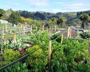 The Northeast Valley Community Garden. Photo: ODT