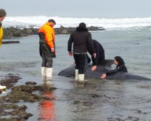 Fifteen people have been trying to save the whale, including staff from Doc, Dive Otago and...
