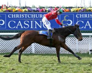 Jockey Michael Mitchell and High Forty are looking to scale the heights of Grand National...