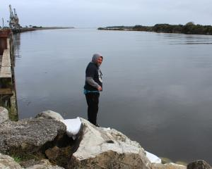 Shane Peipi surveys the Grey River at the coveted whitebaiting  spot, the ''Big Rock''. Photo:...