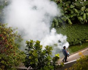 A contractor fogs a condominium garden in Singapore in an effort to kill mosquitoes. Photo: Reuters