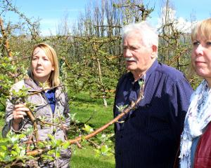 Orchardist Con van der Voort (centre) tells  Port Otago customer service co-ordinator Trish Reid ...