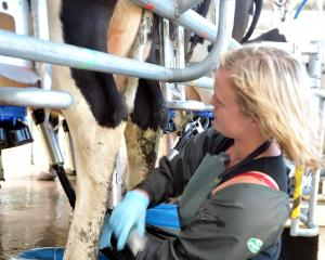 Dairy farmers are hoping for better returns from Fonterra in the future. PHOTO: CHRISTINE O'CONNOR