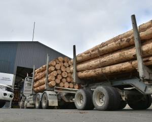 Logging trucks queue up outside company C3's drive-through yard in Dunedin, for wood volume...