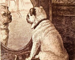 Dog and Mirror, engraving by G. F. Hughes from a painting by E. Rischgitz. Photos: supplied.