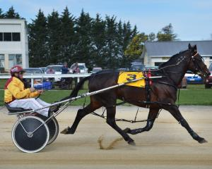 Franco Ledger and trainer-driver Hamish Hunter warming up before the Hannon Memorial at Oamaru on...