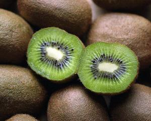 Kiwifruit features highly in successful horticultural exports. Photo: ODT.