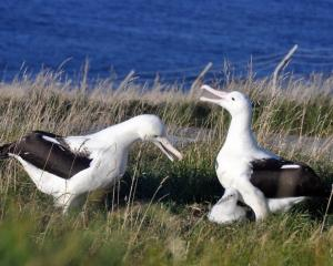 Photo: Royal Albatross Centre