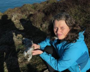Te Runanga o Moeraki member Nola Tipa empties traps of rats and rabbits. Photo: Shannon Gillies.
