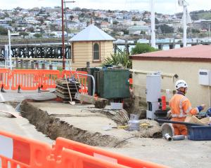 Oamaru blue penguins could be using New Zealand's first penguin underpass within three weeks as...
