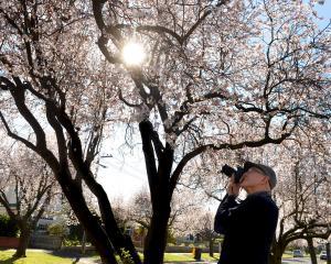 New Dunedin resident Warren Jowett (75), says the beauty of the city in spring is on a list he...