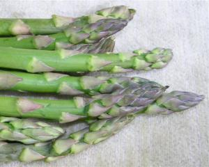 Asparagus was spread throughout Europe by the Romans.