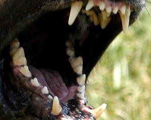 dog_teeth_sig_jpg_54b5f5dfb2.jpg