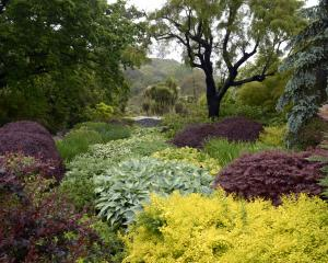 Clive Lister Garden at  Dunedin Botanic Garden. Photo: Gerard O'Brien.
