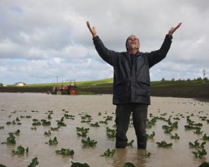 Brydone Growers owner-operator Marty Quennell stands in his flooded paddock of broccoli and...