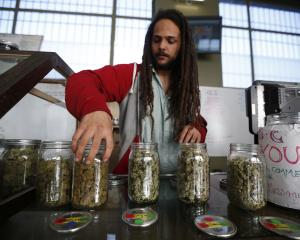 Volunteer Charlie Kirchheimer (25) displays jars of dried cannabis buds at the La Brea Collective...