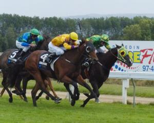 Landales Gold, pictured winning at Wingatui in February, is looking to covert a string of recent...