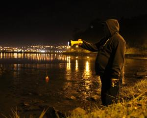 Vili Tupai, of South Dunedin, caught four octopuses the night before, so he was back at the...