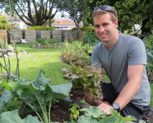 Otago Polytechnic natural resources team member Michael Gaffney picks a lettuce from one of the...