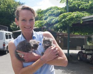 SPCA Otago vet Helen Beattie holds two kittens up for adoption, just two of many the SPCA...