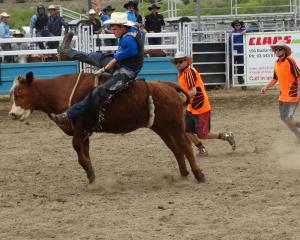 Sean Brenssell, of Oamaru, competes in the second  division bull ride at the Wanaka rodeo...