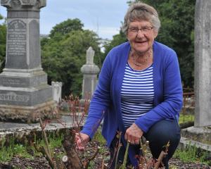 Heritage Roses Otago member Ann Williams shows a rose damaged by a mystery substance sprayed at...