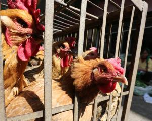 China egg farmers are having to keep chickens longer than they normally would. Photo: Reuters